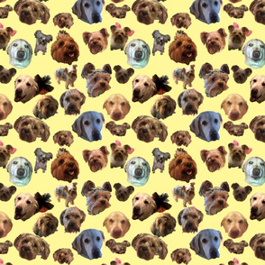 Puppy Explosion on Yellow