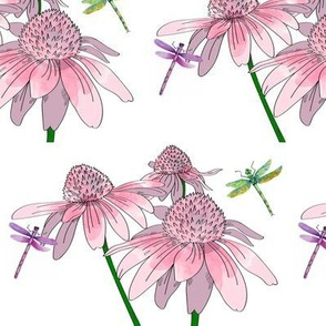 Purple Coneflower And Dragonflies