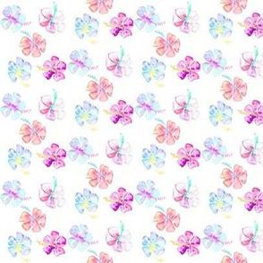hibiscus multi mini