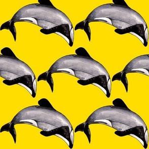 Maui Dolphin Sunshine