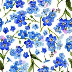 """7"""" hand drawn watercolor forget-me-not flowers on white"""