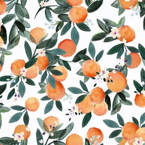 Dear Clementine oranges on white