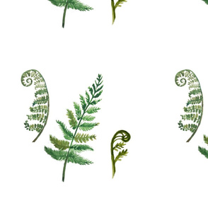 Unfurled Fern Collage