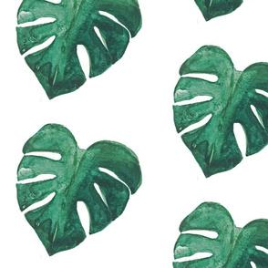 Monstera Leaf PNG
