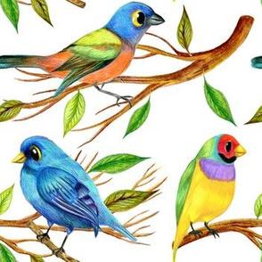 Curious birdies