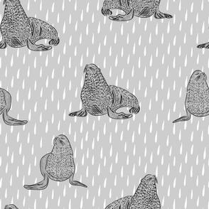 Seals- gray watercolor