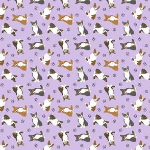 Tiny Cardigan Welsh Corgi - purple