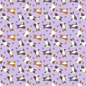 Tiny fluffy Cardigan Welsh Corgi - purple