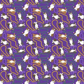 Tiny fluffy Cardigan Welsh Corgi - Mardi Gras