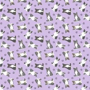 Tiny fluffy merle and black Cardigan Welsh Corgi - purple