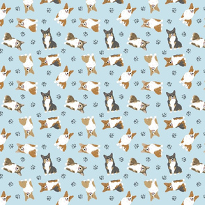 Tiny Pembroke Welsh Corgi - blue