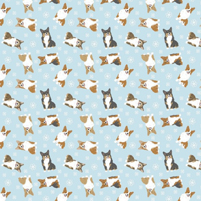 Tiny Pembroke Welsh Corgi - winter snowflakes