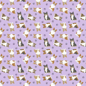 Tiny fluffy Pembroke Welsh Corgi - purple