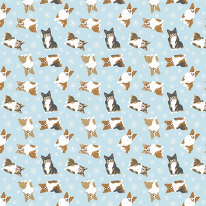 Tiny fluffy Pembroke Welsh Corgi - winter snowflakes
