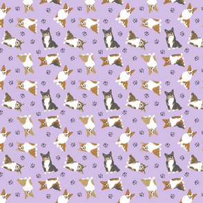 Tiny tailed Pembroke Welsh Corgi - purple