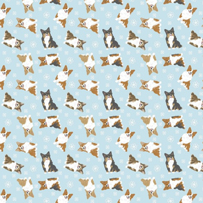 Tiny fluffy tailed Pembroke Welsh Corgi - winter snowflakes