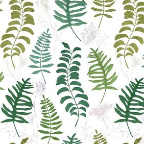 Ferns on white