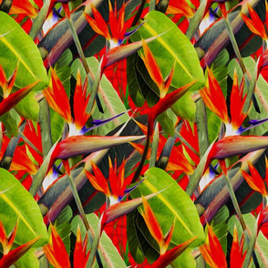 Tropical brights bird of paradise. Candy rose reds with tropical forest leafy green leaves