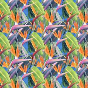 Bird of paradise - cobalt blue setting, tiger orange flower heads with chartreuse leafy green foliage.