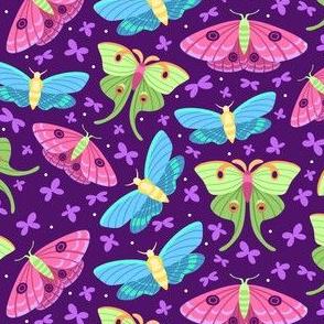 Spring Moths Primary on Purple