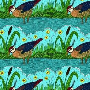 busy bird in colour