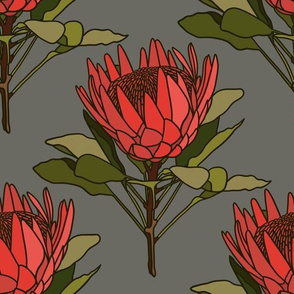 Proteas (red) on grey
