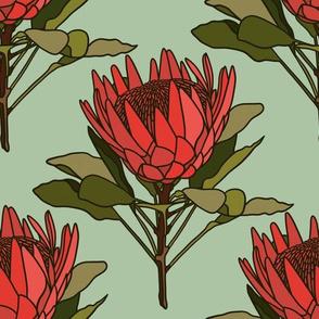 Protea on mint - Australian flora