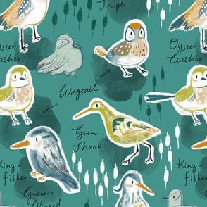 Waterbirds field guide