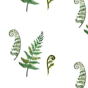 Stages of Ferns