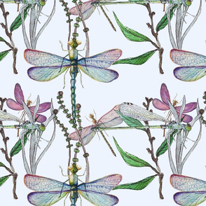 Dreamy Dragonflies