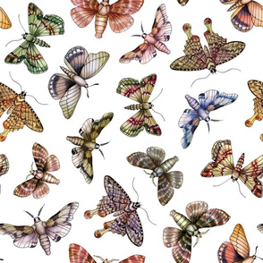 A Multitude Of Moths - Colorful Moth Pattern