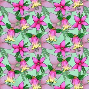 Waxflower Crowea and Canberra Bells Correa Flowers