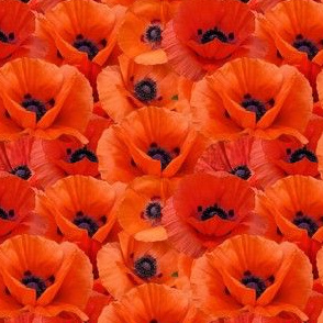 all poppies