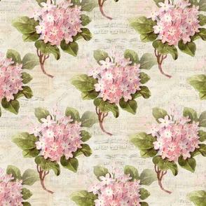 Pink Hydrangea Vintage Music