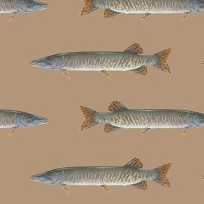 muskellunge on warm tan