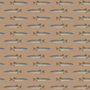 "tiny (1"")  muskellunge on warm tan"