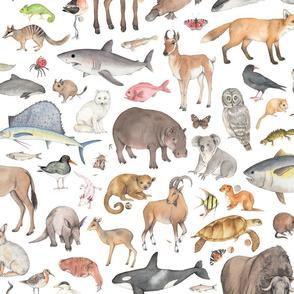 Animal Kingdom large print