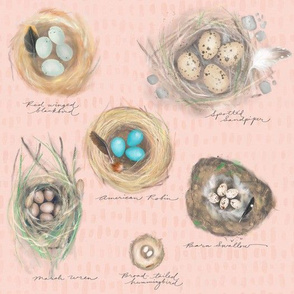 nature journal: cozy bird nests on blossom
