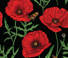 Botanical Red Poppy Flowers with Butterflies - Black Larger Size