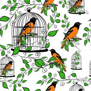 Oriole Caged