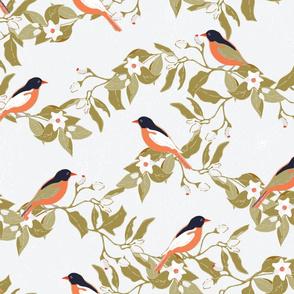 Birds on the orange tree branches