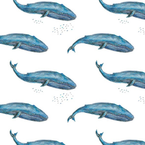 Blue Whale - Medium (1600px)