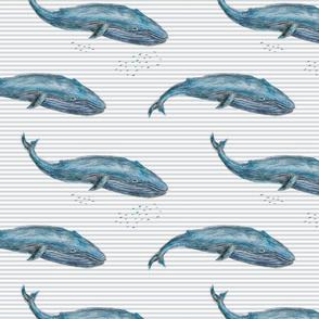 Blue Whale on grey stripes