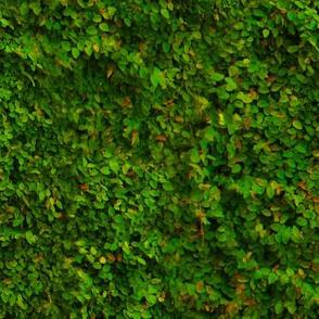 Seamless Greenery