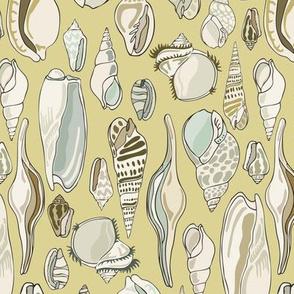 Shells - Straw