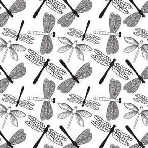 Dragonflies on white background