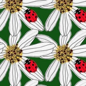 Lady pollinator