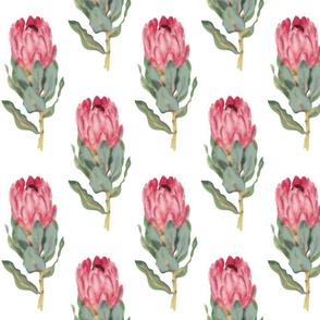Protea watercolour pattern