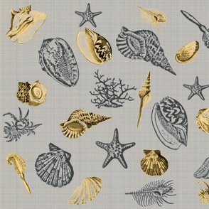 sea shells grey yellow