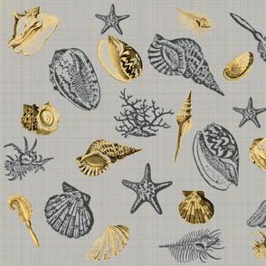 sea shells grey yellow
